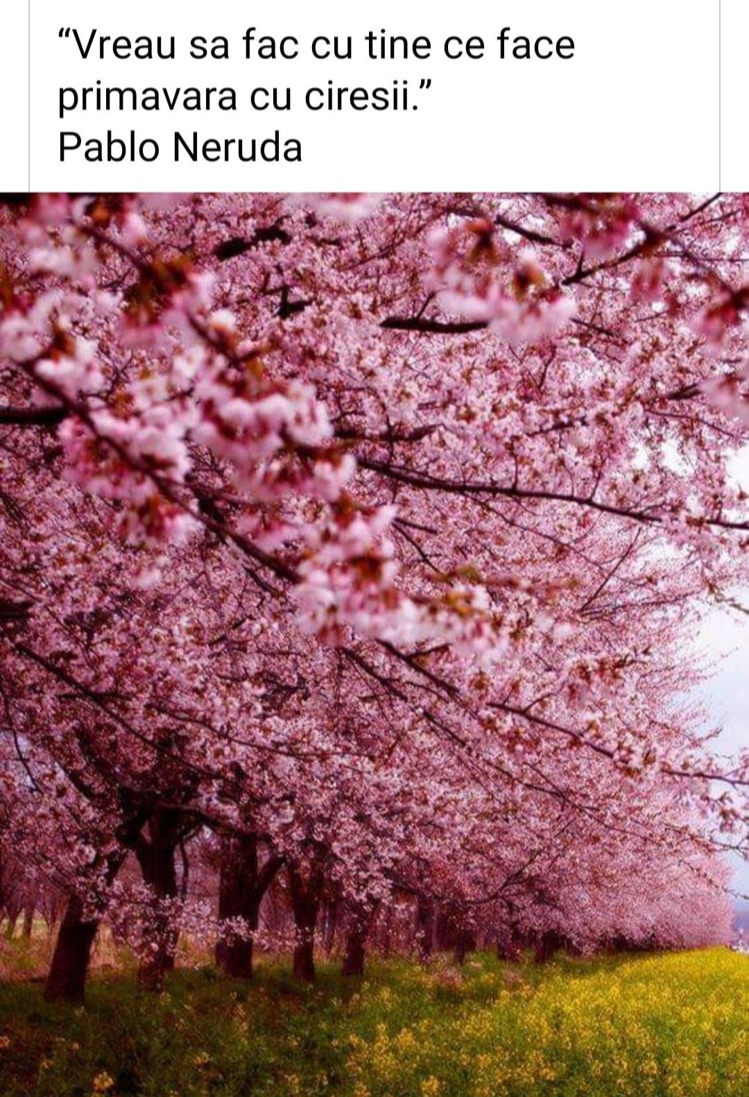 """,,Vreau să fac cu tine ce face primăvara cu cireșii"""""""